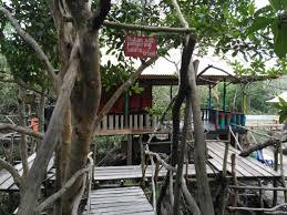 hutan mangrove berasa hutan amazone
